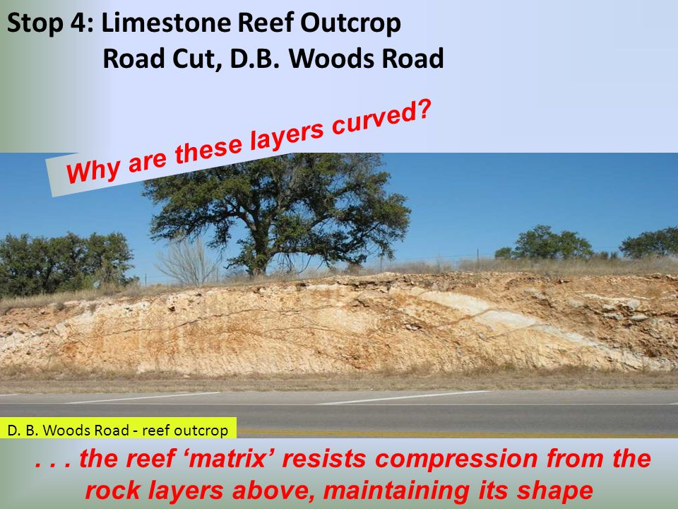 D. B. Woods Road - reef outcrop Stop 4: Limestone Reef Outcrop Road Cut, D.B.