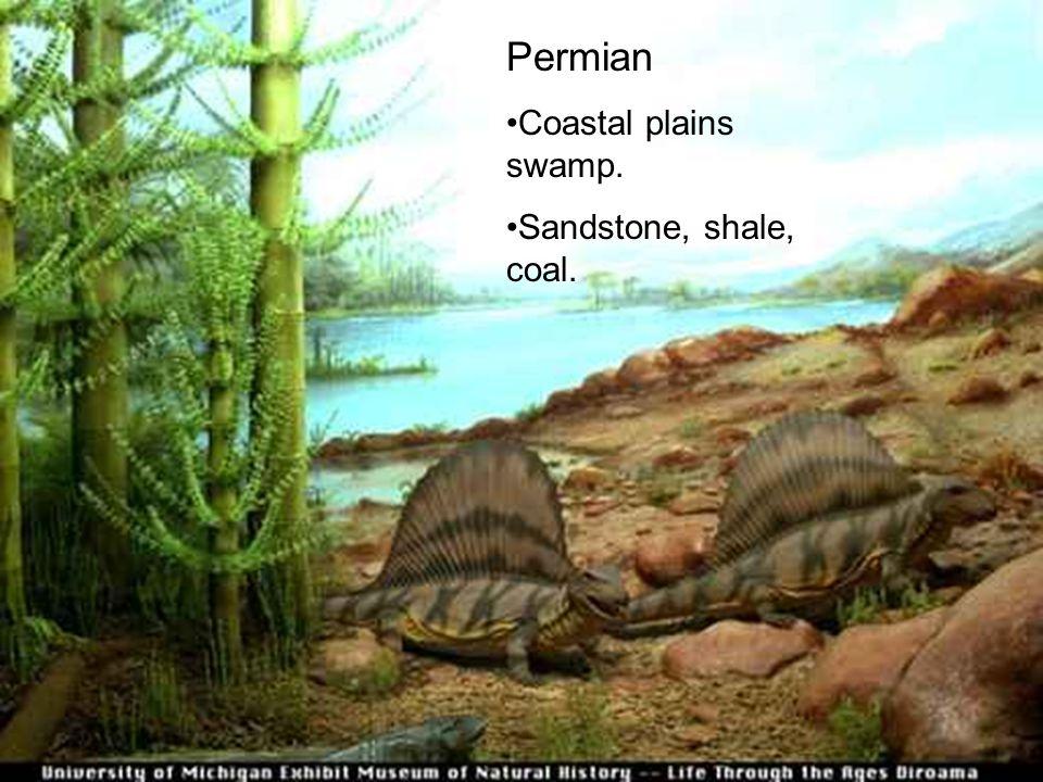 Permian Coastal plains swamp. Sandstone, shale, coal.