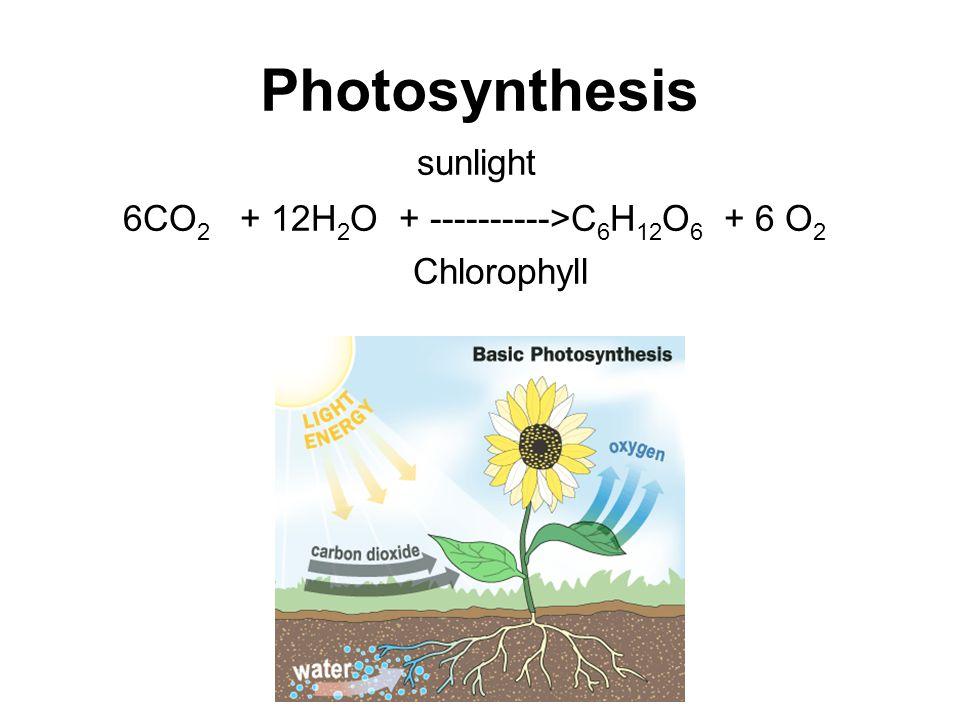 Photosynthesis sunlight 6CO 2 + 12H 2 O + ---------->C 6 H 12 O 6 + 6 O 2 Chlorophyll
