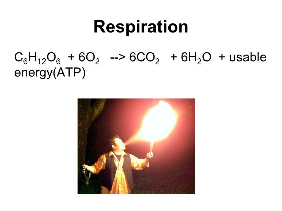 Respiration C 6 H 12 O 6 + 6O 2 --> 6CO 2 + 6H 2 O + usable energy(ATP)