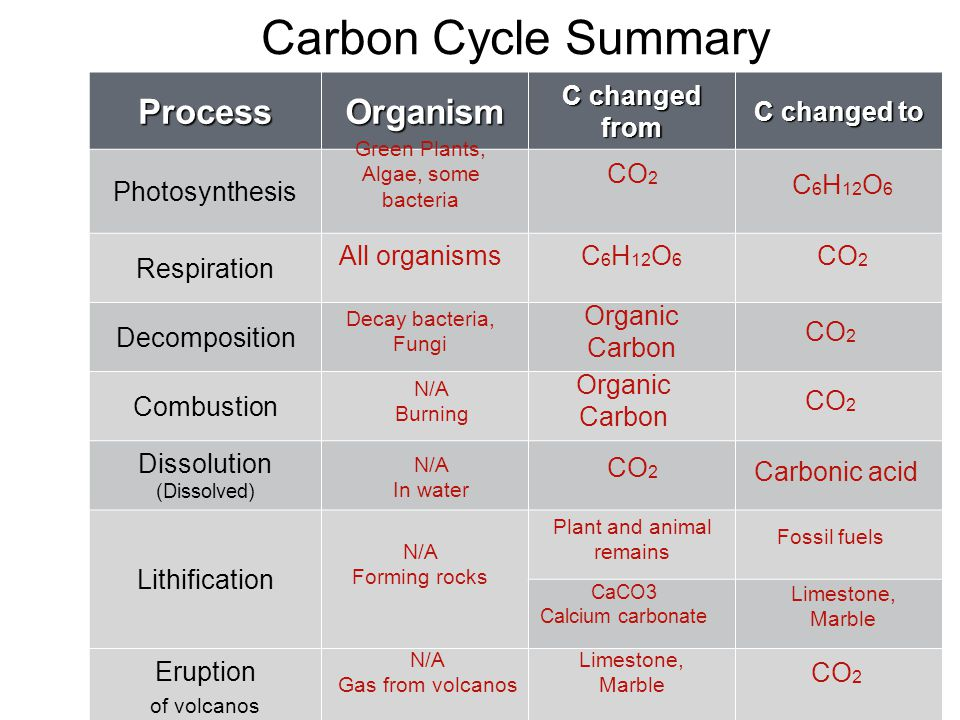 Carbon Cycle Summary ProcessOrganism C changed from C changed to Photosynthesis Respiration Decomposition Combustion Dissolution (Dissolved) Lithification Eruption of volcanos Green Plants, Algae, some bacteria CO 2 C 6 H 12 O 6 All organismsC 6 H 12 O 6 CO 2 Decay bacteria, Fungi Organic Carbon CO 2 N/A Burning Organic Carbon CO 2 N/A In water CO 2 Carbonic acid N/A Forming rocks Plant and animal remains Fossil fuels CaCO3 Calcium carbonate Limestone, Marble Limestone, Marble CO 2 N/A Gas from volcanos