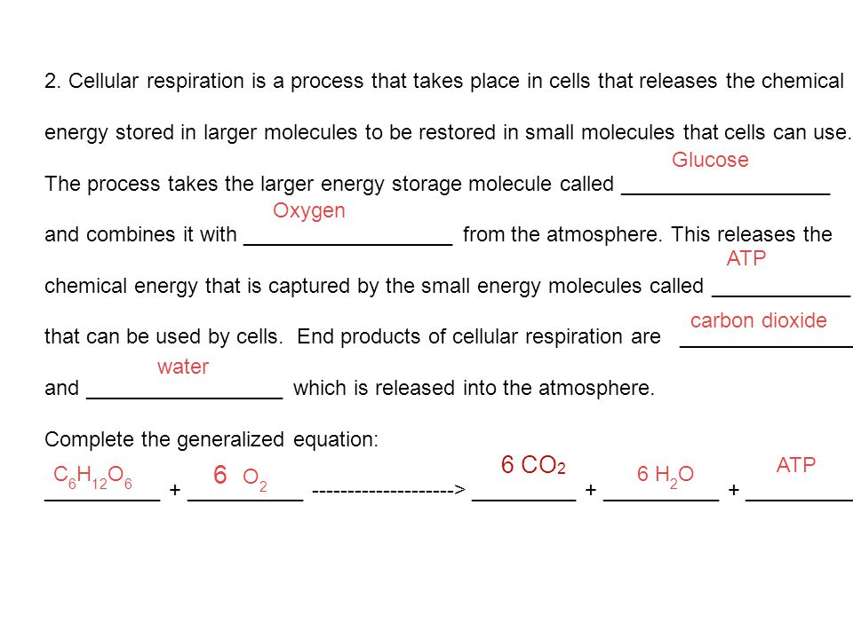 2. Cellular respiration is a process that takes place in cells that releases the chemical energy stored in larger molecules to be restored in small mo