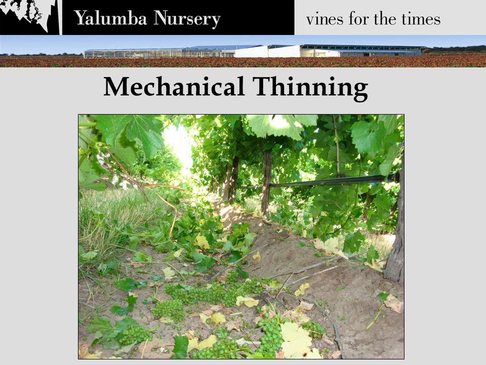 Mechanical Thinning