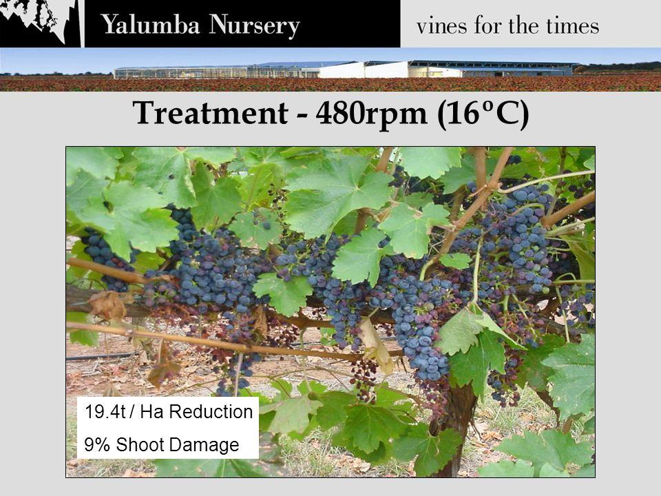 Treatment - 480rpm (16ºC) 19.4t / Ha Reduction 9% Shoot Damage