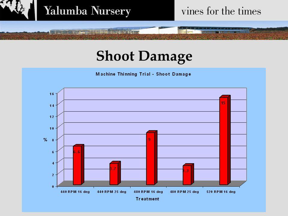Shoot Damage