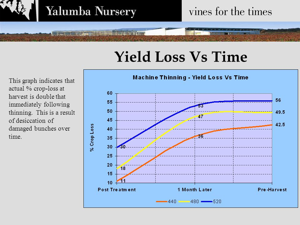 Yield Loss Vs Time This graph indicates that actual % crop-loss at harvest is double that immediately following thinning.