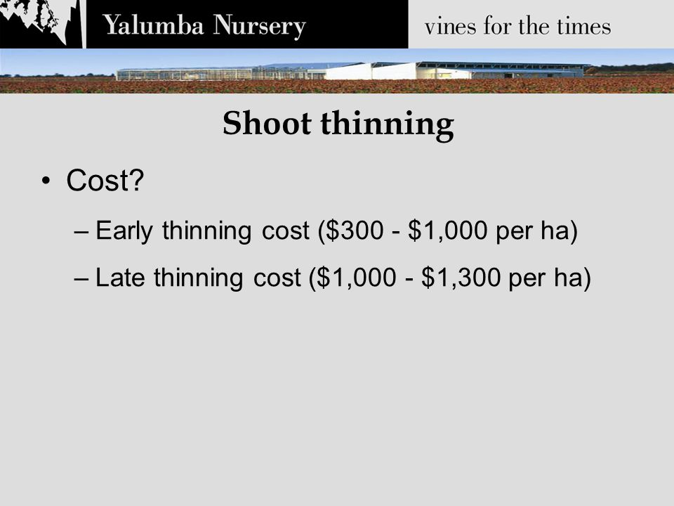 Shoot thinning Cost? –Early thinning cost ($300 - $1,000 per ha) –Late thinning cost ($1,000 - $1,300 per ha)
