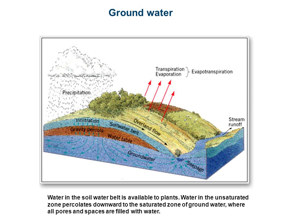 Ground water Water in the soil water belt is available to plants. Water in the unsaturated zone percolates downward to the saturated zone of ground wa