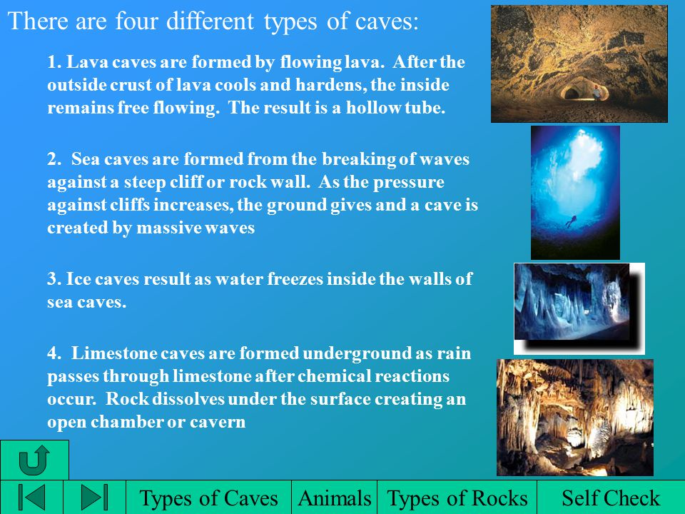 Types of CavesAnimalsTypes of RocksSelf Check There are four different types of caves: 1.