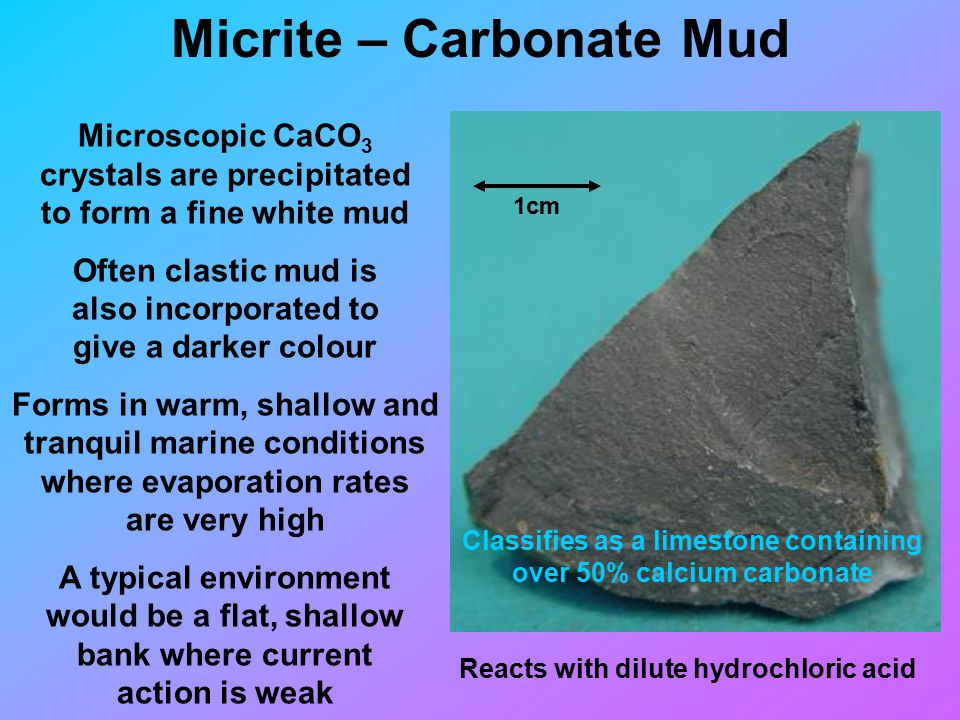Micrite – Carbonate Mud 1cm Microscopic CaCO 3 crystals are precipitated to form a fine white mud Often clastic mud is also incorporated to give a darker colour Forms in warm, shallow and tranquil marine conditions where evaporation rates are very high A typical environment would be a flat, shallow bank where current action is weak Reacts with dilute hydrochloric acid Classifies as a limestone containing over 50% calcium carbonate