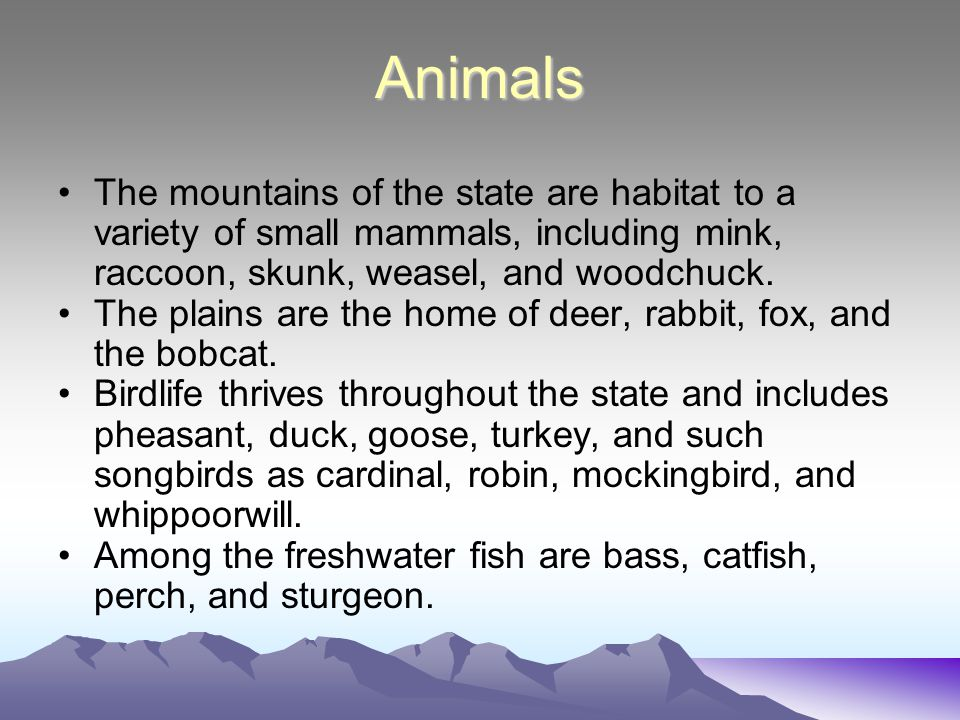 Animals The mountains of the state are habitat to a variety of small mammals, including mink, raccoon, skunk, weasel, and woodchuck. The plains are th