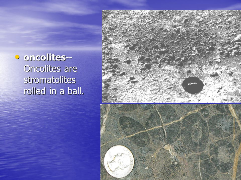 oncolites-- Oncolites are stromatolites rolled in a ball.