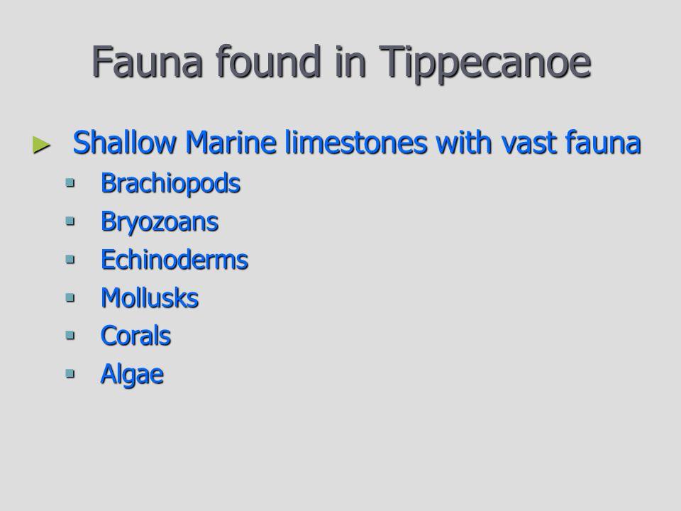 Fauna found in Tippecanoe ► Shallow Marine limestones with vast fauna  Brachiopods  Bryozoans  Echinoderms  Mollusks  Corals  Algae