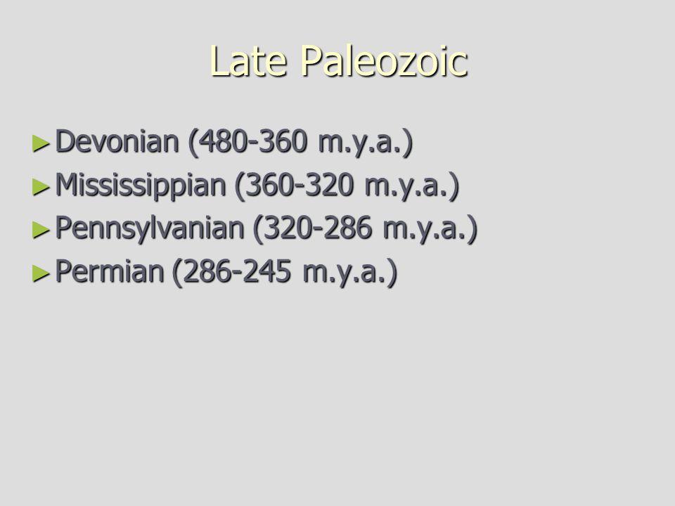 Late Paleozoic ► Devonian (480-360 m.y.a.) ► Mississippian (360-320 m.y.a.) ► Pennsylvanian (320-286 m.y.a.) ► Permian (286-245 m.y.a.)