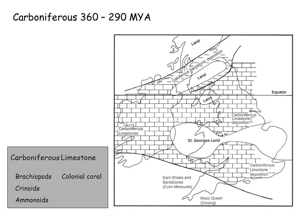 Carboniferous 360 – 290 MYA Carboniferous Limestone Brachiopods Crinoids Ammonoids Colonial coral