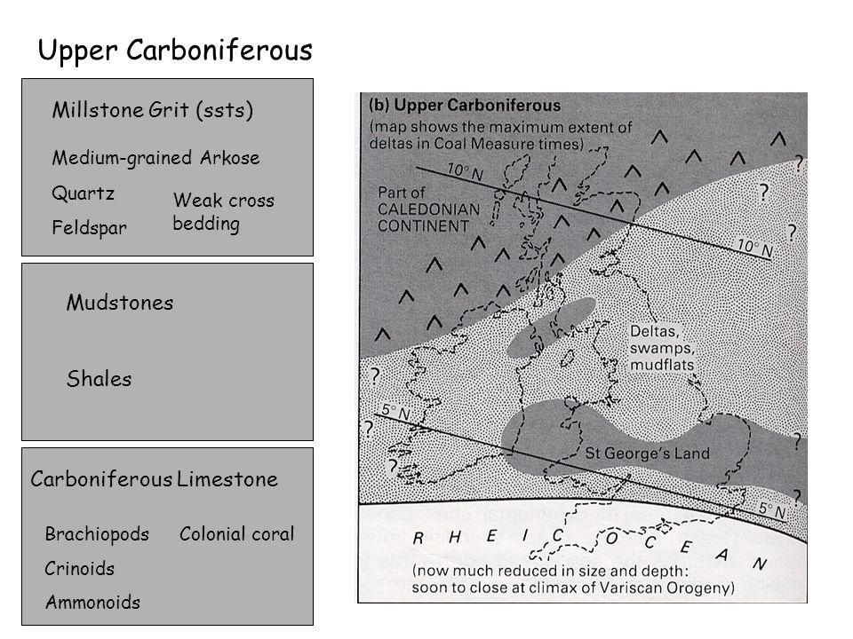 Upper Carboniferous Carboniferous Limestone Brachiopods Crinoids Ammonoids Colonial coral Millstone Grit (ssts) Medium-grained Arkose Quartz Feldspar