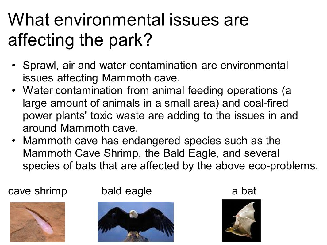 What environmental issues are affecting the park? Sprawl, air and water contamination are environmental issues affecting Mammoth cave. Water contamina