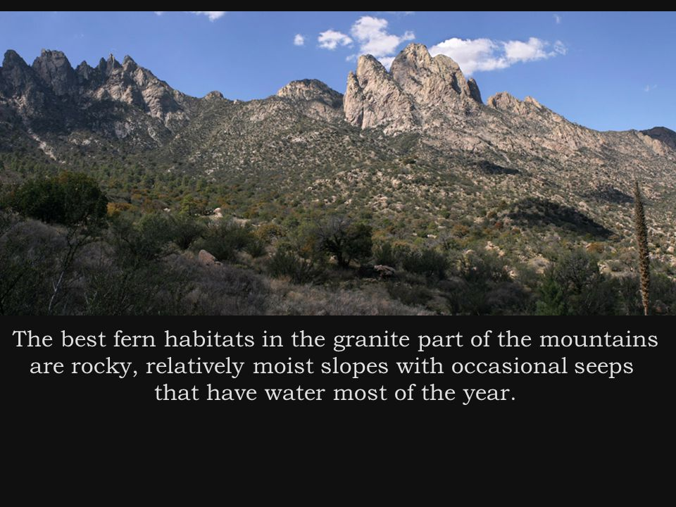 The best fern habitats in the granite part of the mountains are rocky, relatively moist slopes with occasional seeps that have water most of the year.