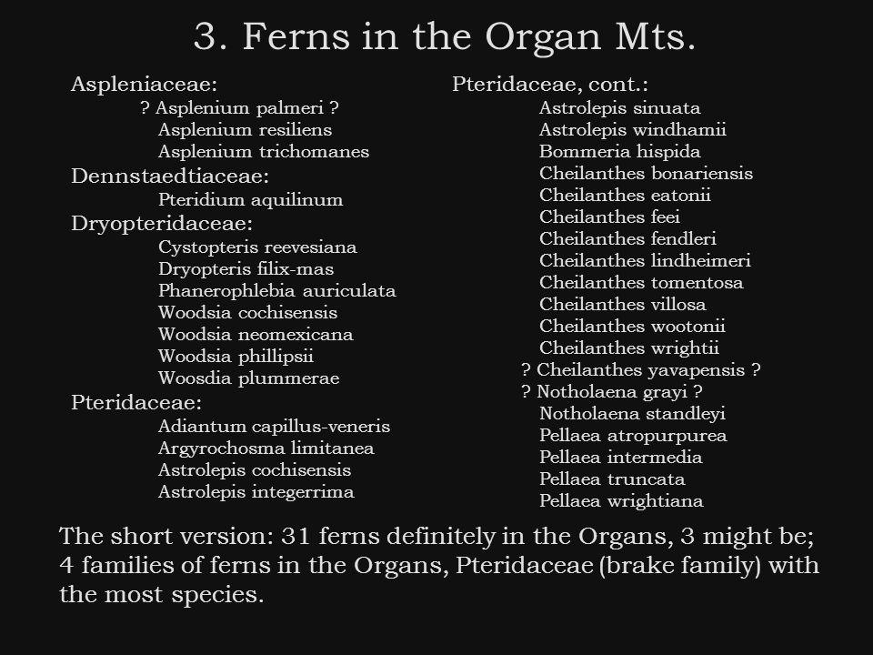 3. Ferns in the Organ Mts. Aspleniaceae: . Asplenium palmeri .