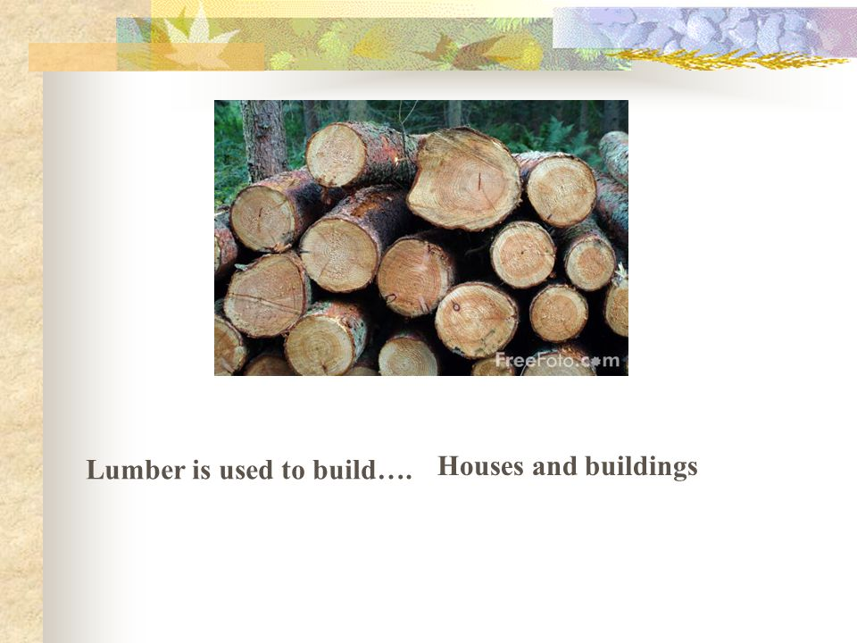Lumber is used to build…. Houses and buildings