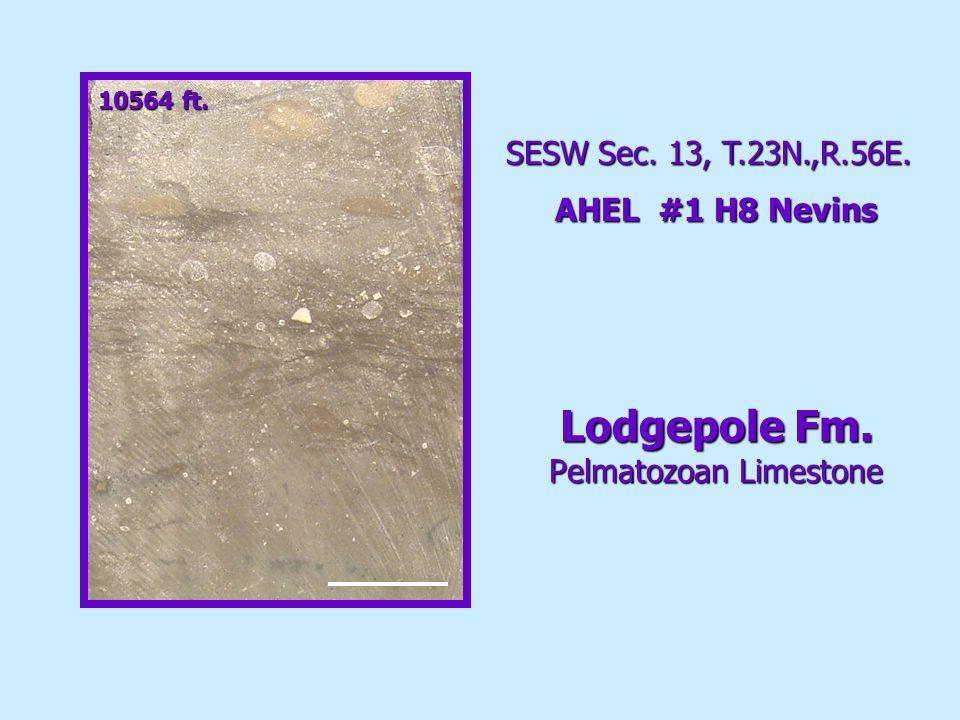 10564 ft. Lodgepole Fm. Pelmatozoan Limestone SESW Sec. 13, T.23N.,R.56E. AHEL #1 H8 Nevins