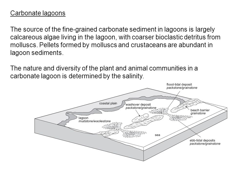 The source of the fine-grained carbonate sediment in lagoons is largely calcareous algae living in the lagoon, with coarser bioclastic detritus from m