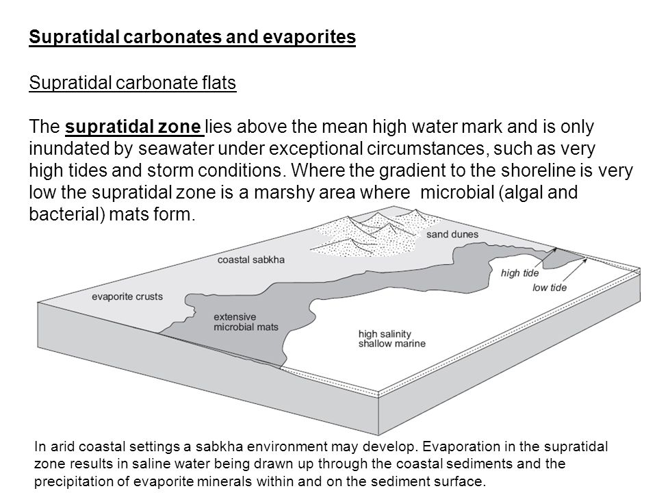 Supratidal carbonate flats The supratidal zone lies above the mean high water mark and is only inundated by seawater under exceptional circumstances,