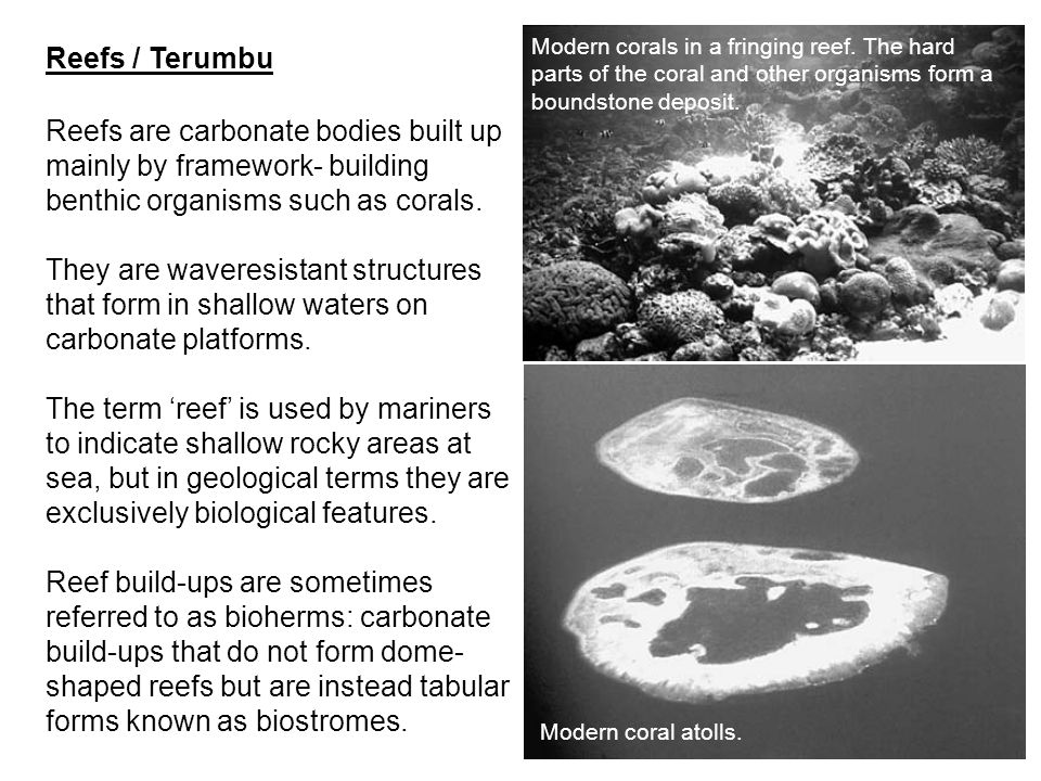 Reefs are carbonate bodies built up mainly by framework- building benthic organisms such as corals. They are waveresistant structures that form in sha