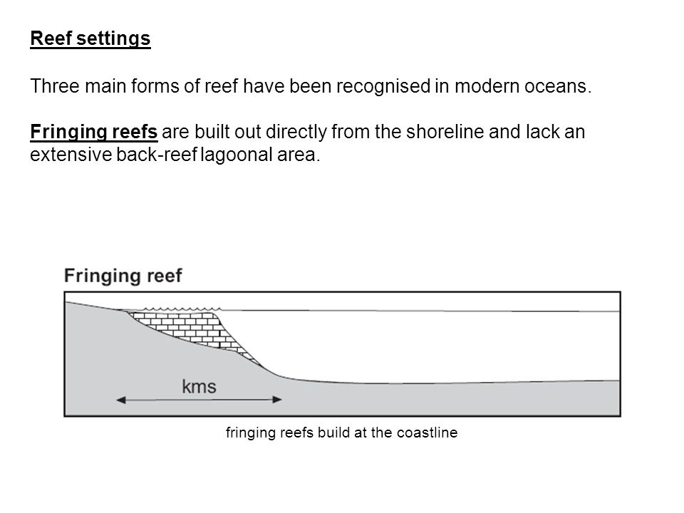 Three main forms of reef have been recognised in modern oceans. Fringing reefs are built out directly from the shoreline and lack an extensive back-re