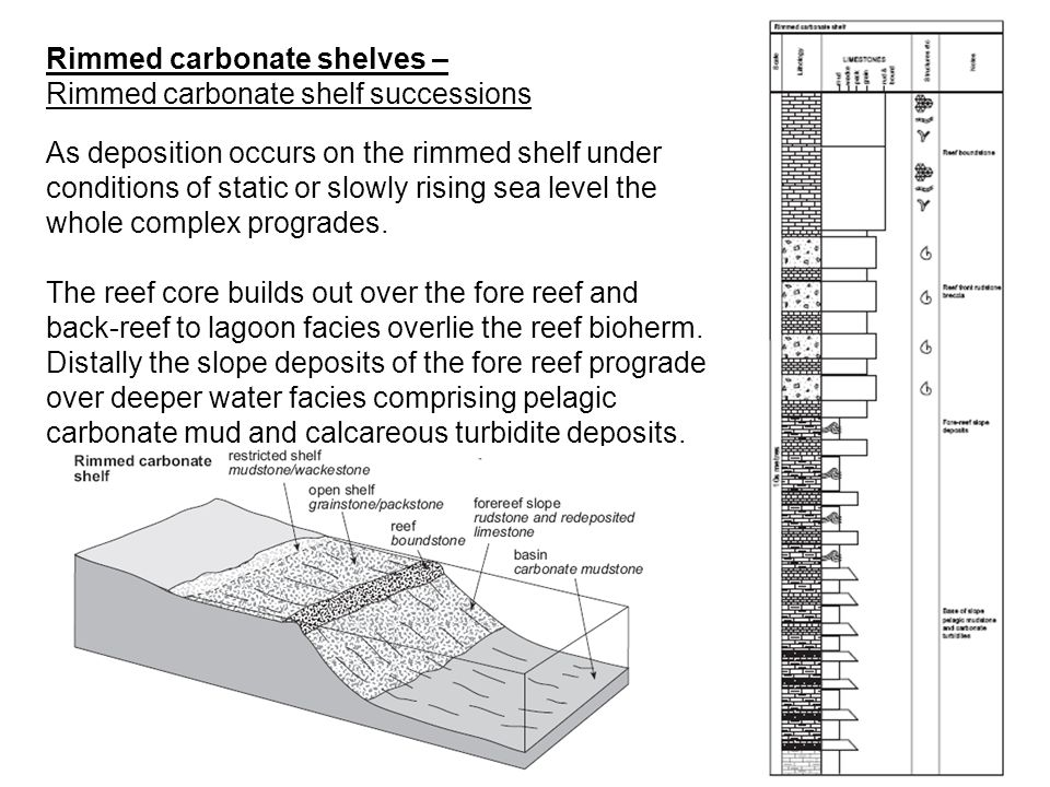 As deposition occurs on the rimmed shelf under conditions of static or slowly rising sea level the whole complex progrades. The reef core builds out o