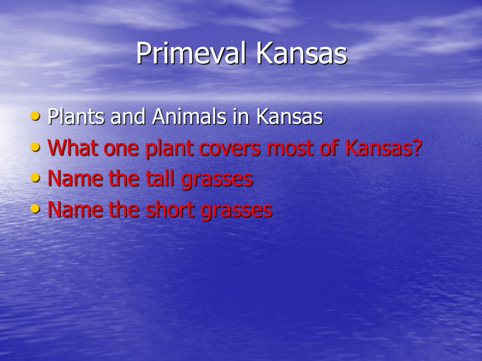 Primeval Kansas Plants and Animals in Kansas Plants and Animals in Kansas What one plant covers most of Kansas.