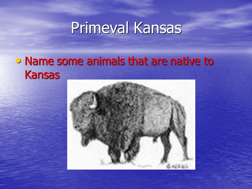 Primeval Kansas Name some animals that are native to Kansas Name some animals that are native to Kansas