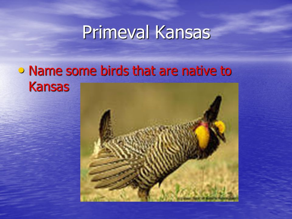 Primeval Kansas Name some birds that are native to Kansas Name some birds that are native to Kansas