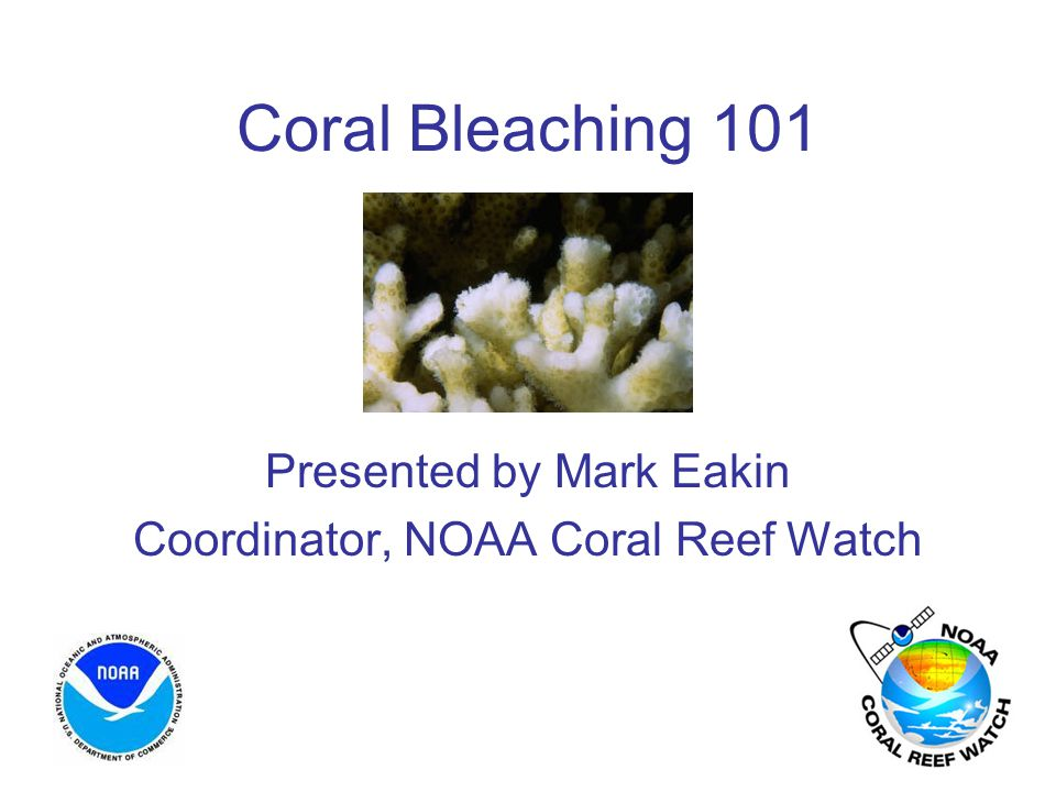 Coral Bleaching 101 Presented by Mark Eakin Coordinator, NOAA Coral Reef Watch