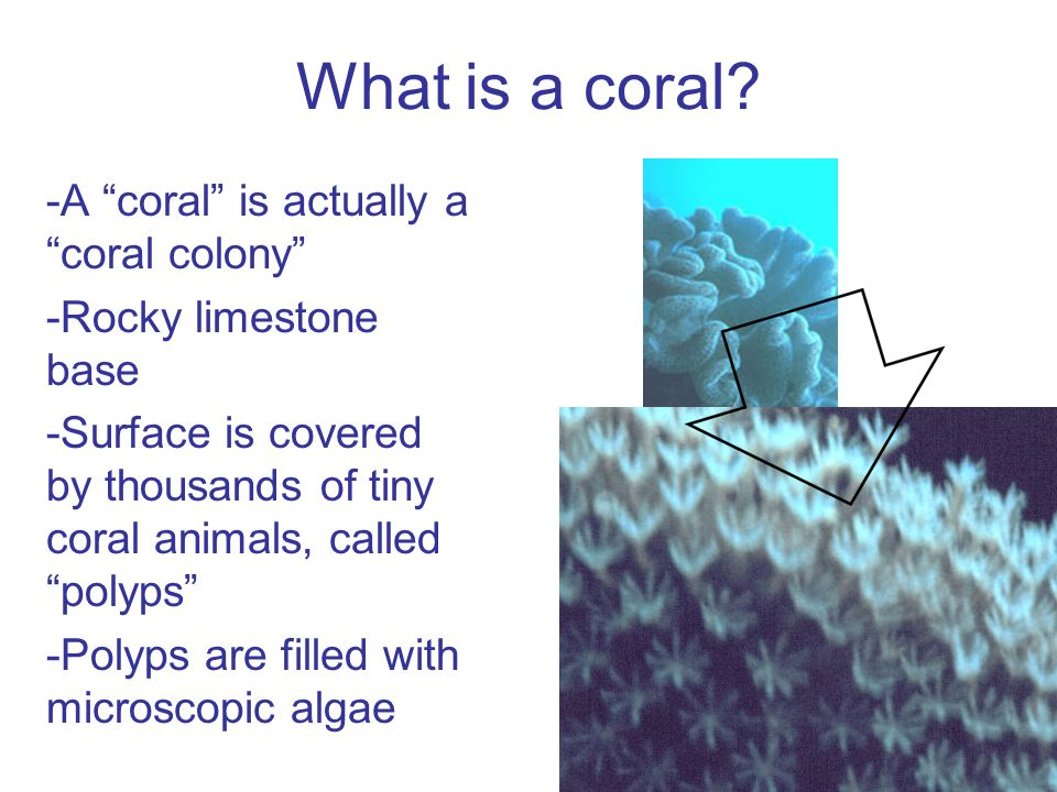 Can we protect corals from bleaching.