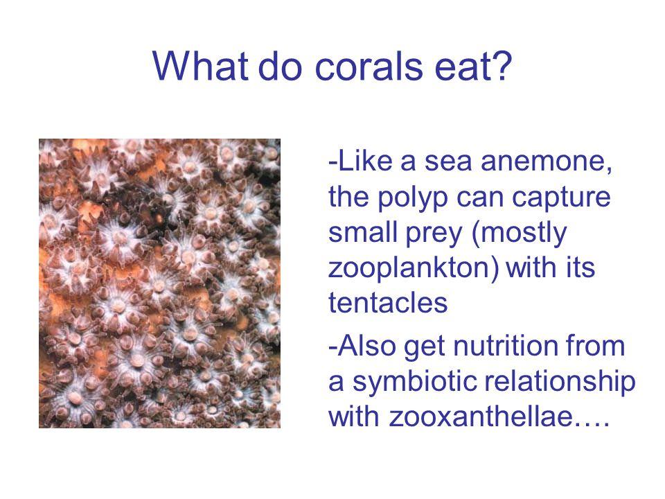What are zooxanthellae? AlgaeFish Shrimp