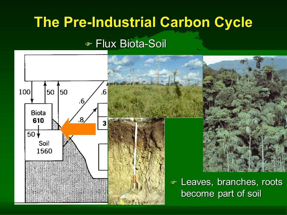 The Pre-Industrial Carbon Cycle F Flux Biota-Soil F Leaves, branches, roots become part of soil F Horel & Geissler Figure 6.3