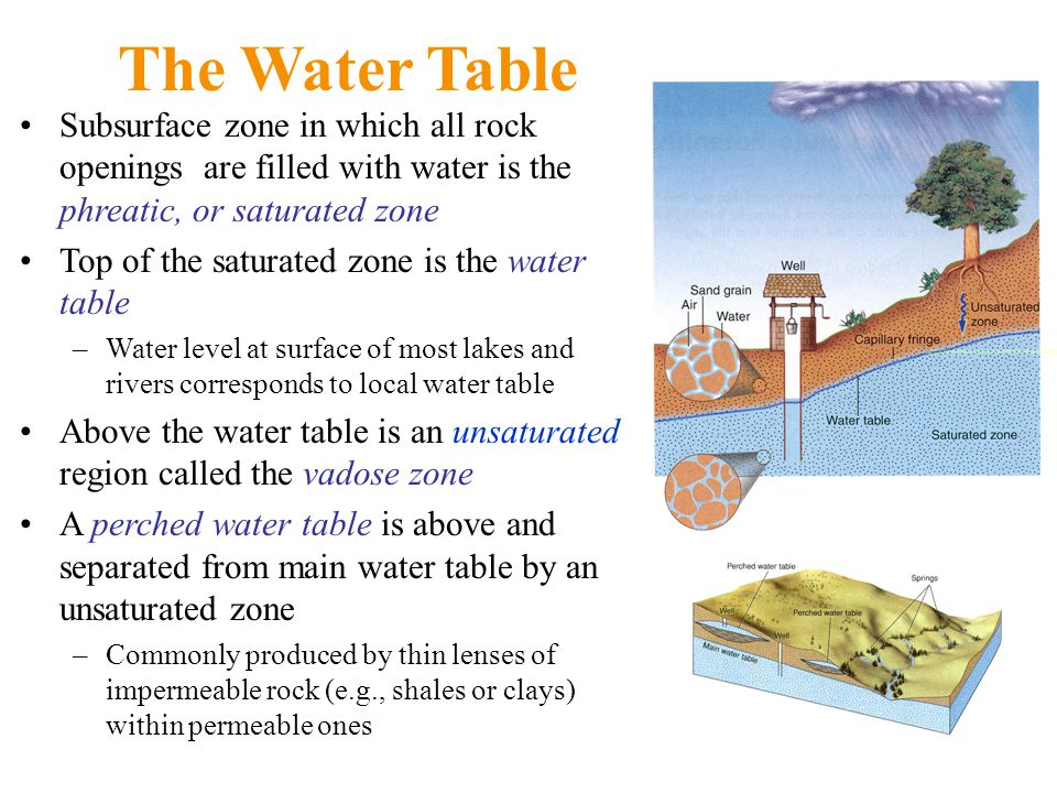 The Water Table Subsurface zone in which all rock openings are filled with water is the phreatic, or saturated zone Top of the saturated zone is the water table –Water level at surface of most lakes and rivers corresponds to local water table Above the water table is an unsaturated region called the vadose zone A perched water table is above and separated from main water table by an unsaturated zone –Commonly produced by thin lenses of impermeable rock (e.g., shales or clays) within permeable ones