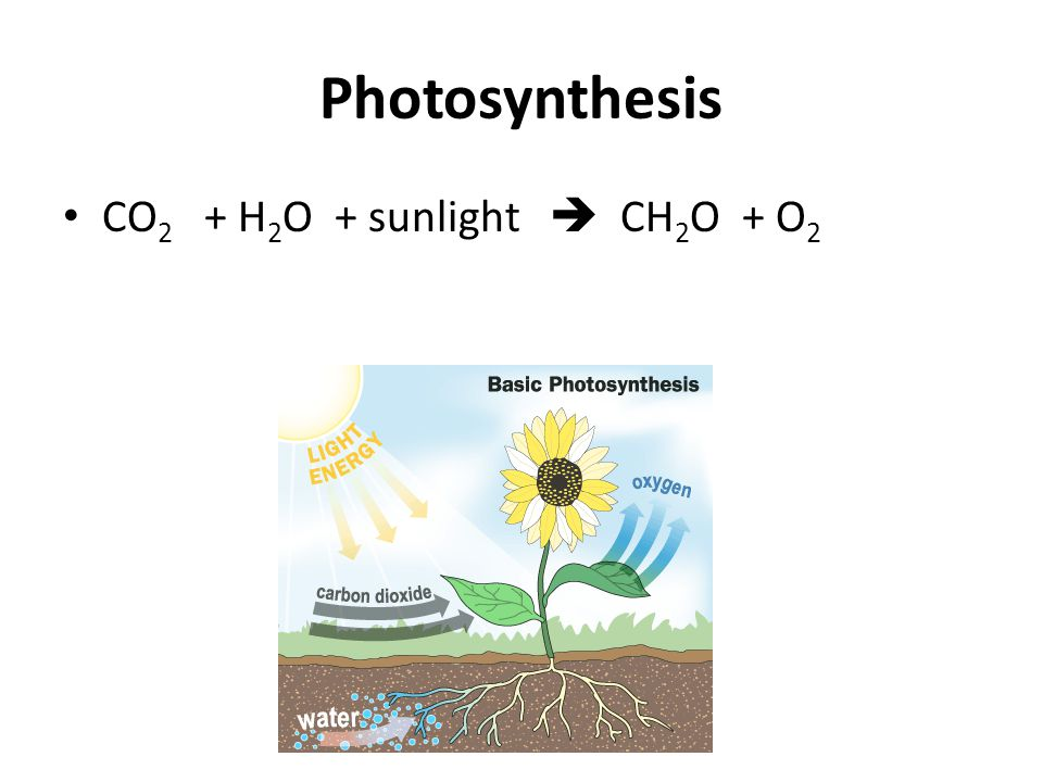 Photosynthesis CO 2 + H 2 O + sunlight  CH 2 O + O 2