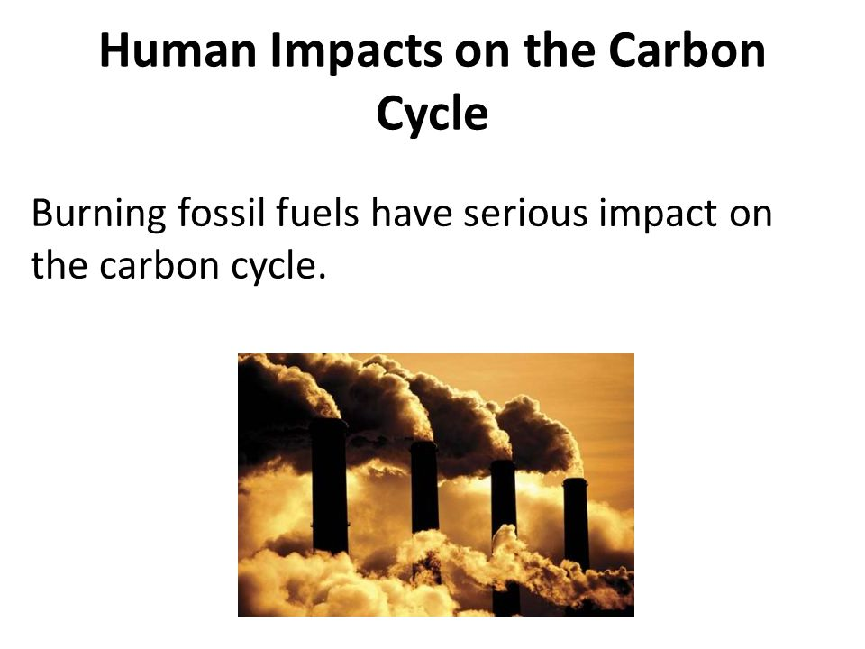 Human Impacts on the Carbon Cycle Burning fossil fuels have serious impact on the carbon cycle.