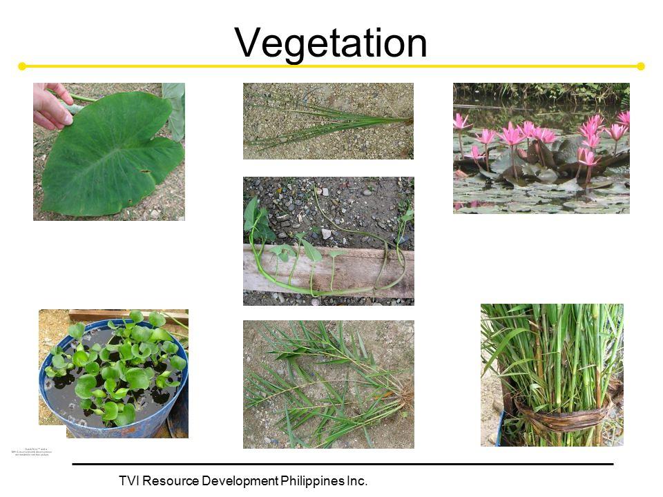 TVI Resource Development Philippines Inc. Vegetation