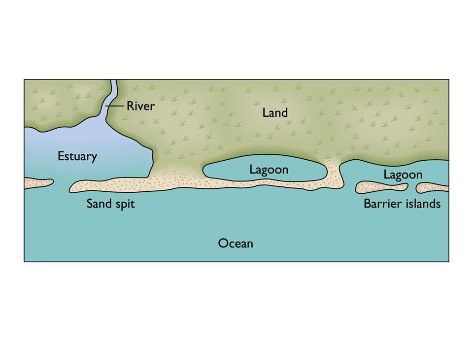 Salt marshes are intertidal flats covered by grassy vegetation.