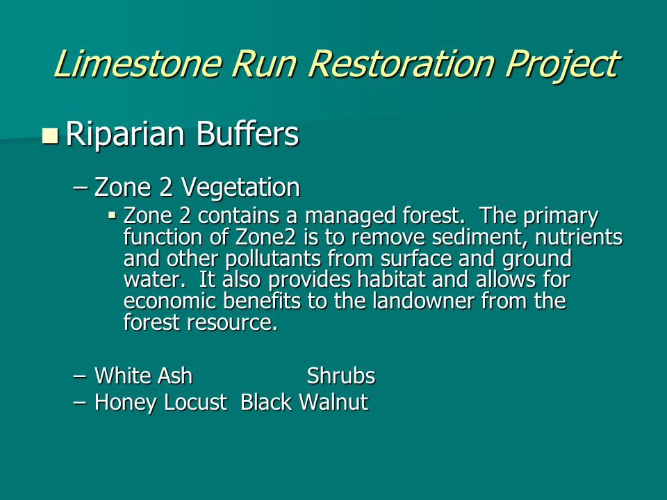 Limestone Run Restoration Project Riparian Buffers Riparian Buffers –Zone 2 Vegetation  Zone 2 contains a managed forest.