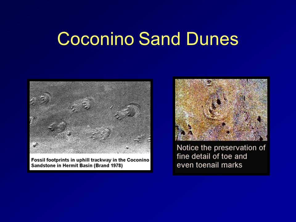 Coconino Sand Dunes