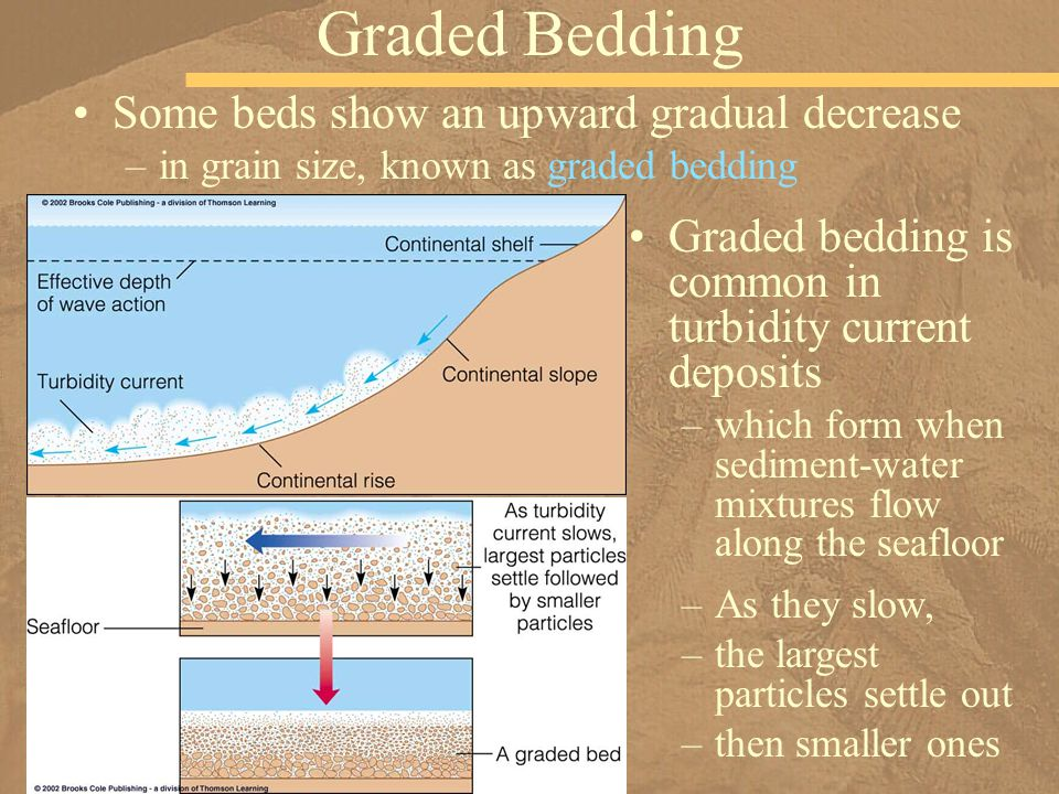 Some beds show an upward gradual decrease –in grain size, known as graded bedding Graded Bedding Graded bedding is common in turbidity current deposits –which form when sediment-water mixtures flow along the seafloor –As they slow, –the largest particles settle out –then smaller ones