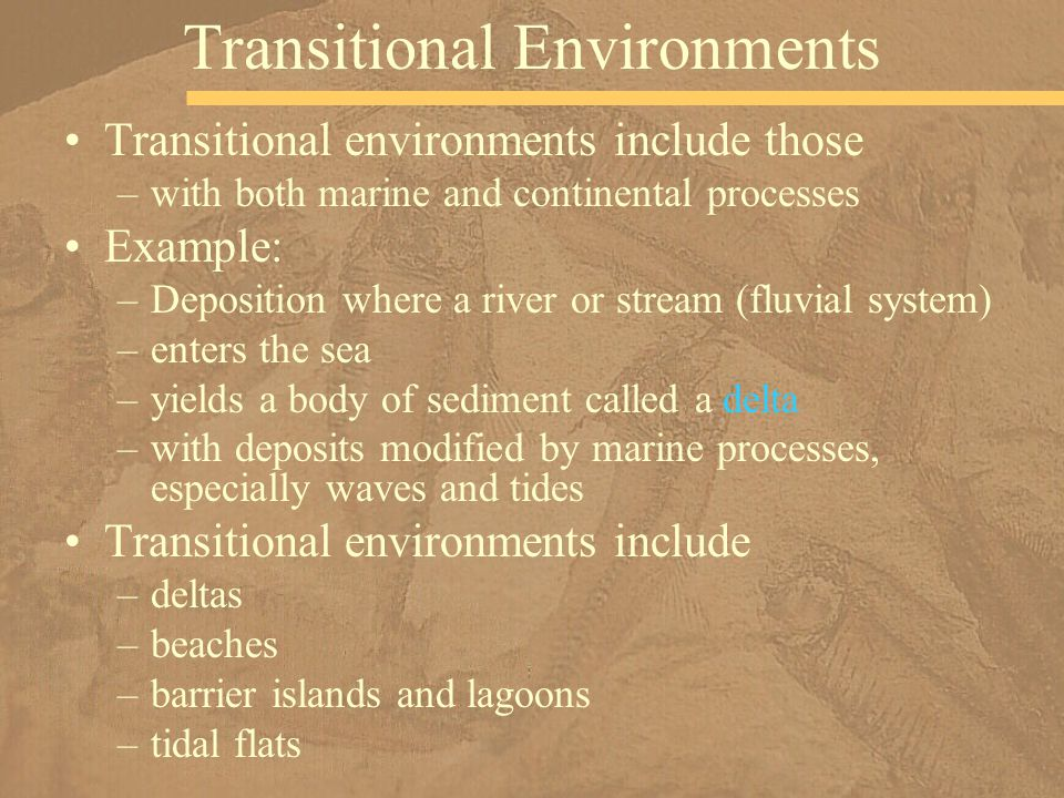 Transitional environments include those –with both marine and continental processes Example: –Deposition where a river or stream (fluvial system) –enters the sea –yields a body of sediment called a delta –with deposits modified by marine processes, especially waves and tides Transitional environments include –deltas –beaches –barrier islands and lagoons –tidal flats Transitional Environments