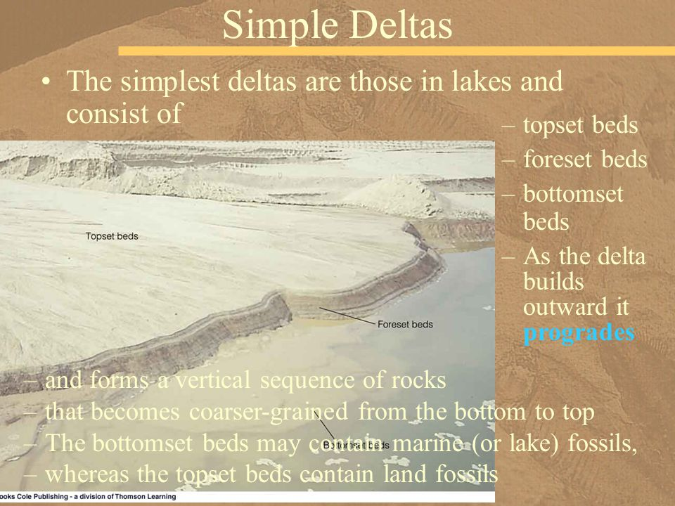 Simple Deltas –topset beds –foreset beds –bottomset beds The simplest deltas are those in lakes and consist of –As the delta builds outward it progrades –and forms a vertical sequence of rocks –that becomes coarser-grained from the bottom to top –The bottomset beds may contain marine (or lake) fossils, –whereas the topset beds contain land fossils