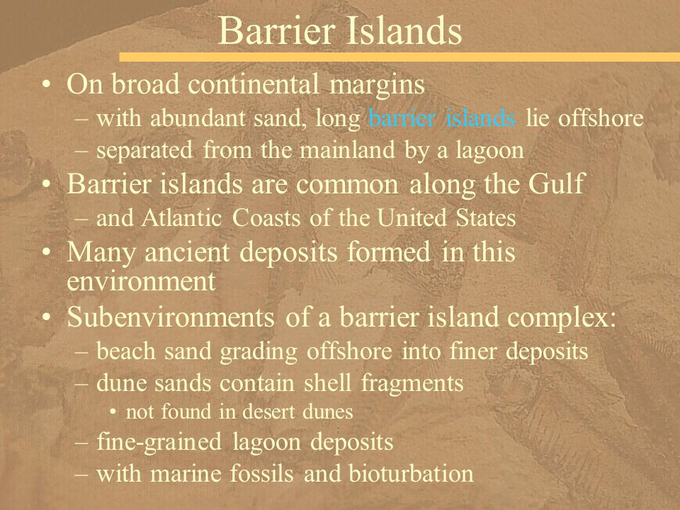 On broad continental margins –with abundant sand, long barrier islands lie offshore –separated from the mainland by a lagoon Barrier islands are common along the Gulf –and Atlantic Coasts of the United States Many ancient deposits formed in this environment Subenvironments of a barrier island complex: –beach sand grading offshore into finer deposits –dune sands contain shell fragments not found in desert dunes –fine-grained lagoon deposits –with marine fossils and bioturbation Barrier Islands