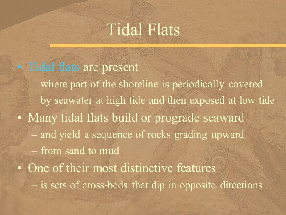Tidal flats are present –where part of the shoreline is periodically covered –by seawater at high tide and then exposed at low tide Many tidal flats build or prograde seaward –and yield a sequence of rocks grading upward –from sand to mud One of their most distinctive features –is sets of cross-beds that dip in opposite directions Tidal Flats