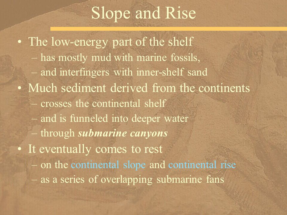 The low-energy part of the shelf –has mostly mud with marine fossils, –and interfingers with inner-shelf sand Much sediment derived from the continents –crosses the continental shelf –and is funneled into deeper water –through submarine canyons It eventually comes to rest –on the continental slope and continental rise –as a series of overlapping submarine fans Slope and Rise